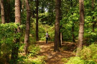 Forêt Biscarrosse Sanguinet